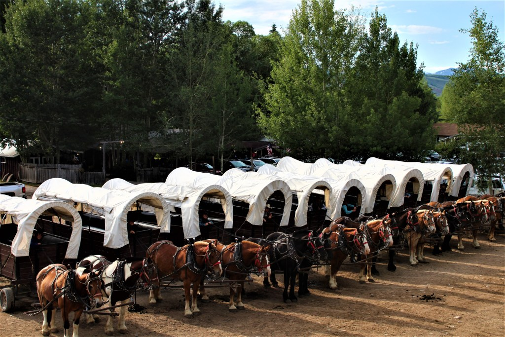 All 10 wagons at the Bar T 5 Chuck Wagon Dinner Ride hooked up and ready to go.