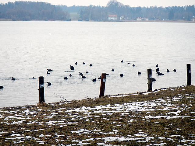 Ufer bei der Prienmündung