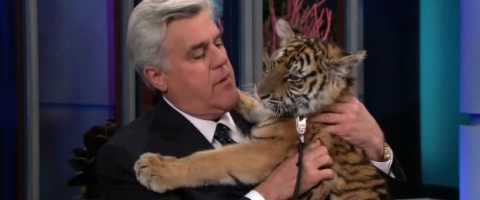 Christoph Waltz On Jay Leno with Animals – Part 1 of 2 by Divya Saxena
