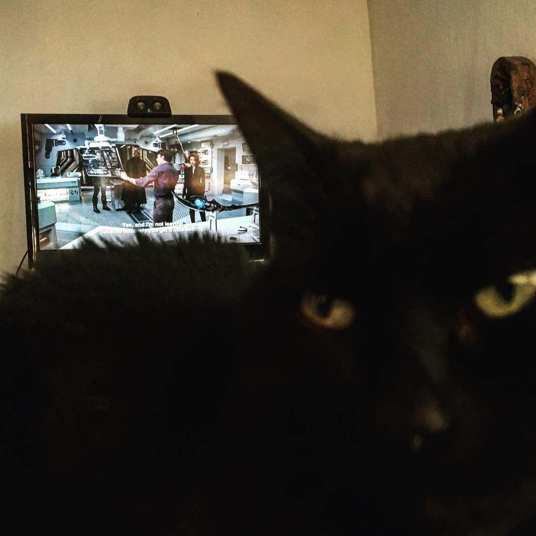 """Where you watching Avengers?"" #Inqui asked… ""watch me instead"", she said. #catsagram #BlackCat"