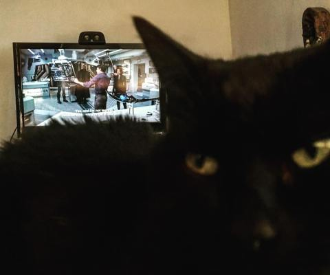 """""""Where you watching Avengers?"""" #Inqui asked… """"watch me instead"""", she said. #catsagram #BlackCat"""