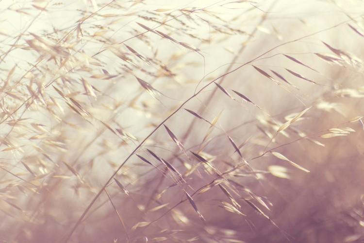 rustgevende sfeerafbeelding van buigende takjes riet in de ochtendzon