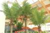 Tropikalna roślinność