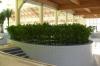 Roślinnośc przy basenie pływackim