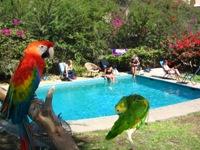 Relaxen bij de pool in Haucachina