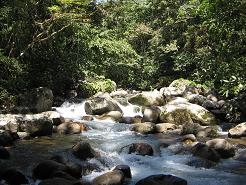 Op Toms land, prachtige beekjes en rivieren door tropisch bos