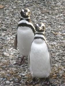 IMG_2822_Trip_naar_pinguinera