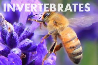 Invertebrates - Basic Biology