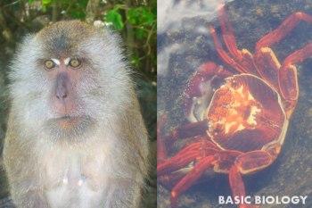 Introduction to animals - vertebrate and invertebrate