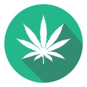 marijuana istock