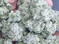 Cannabis Newport Beach