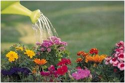 Zuur water uit een waterionisator is goed bloemenwater