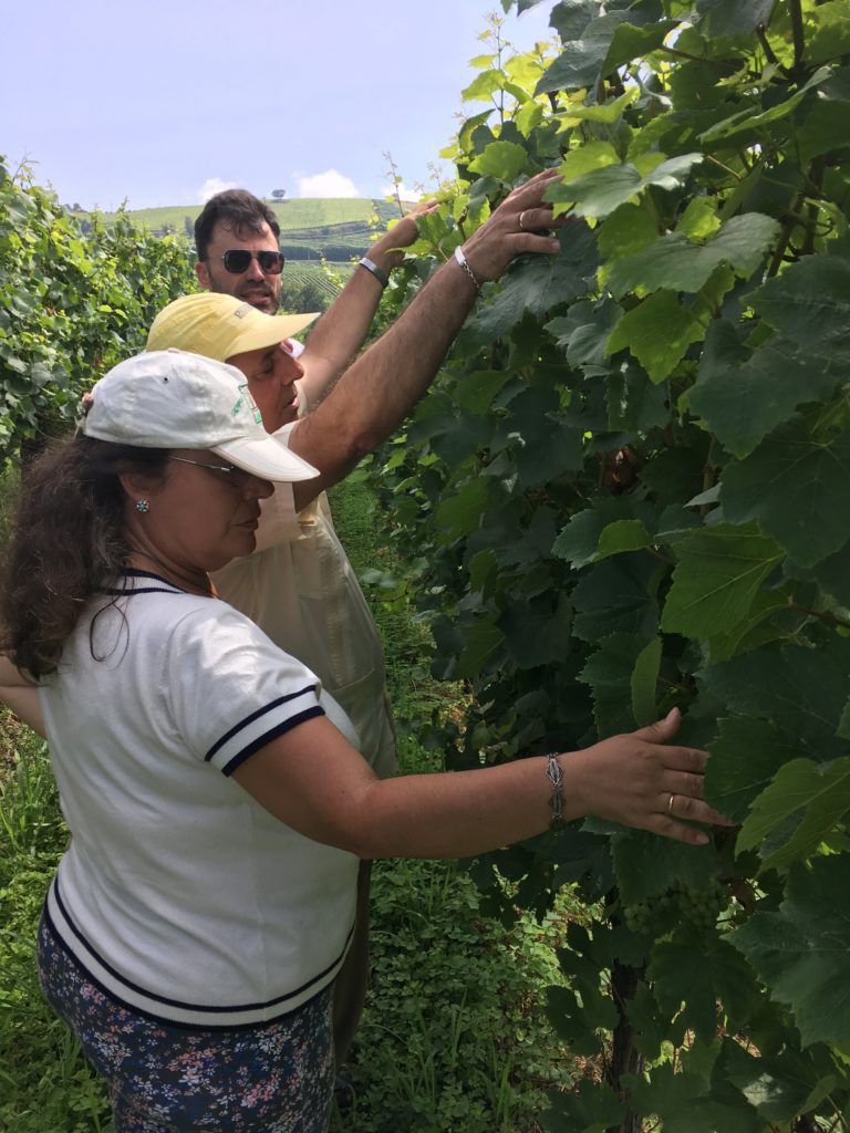 Accessible txakoli house tour vineyards