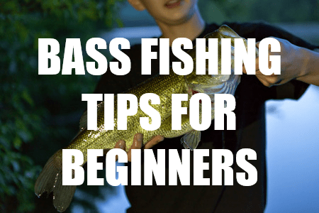 Largemouth bass archives a bass fisherman 39 s guide for Bass fishing for beginners
