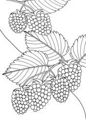 Malvorlagen Obst Basteln Amp Gestalten