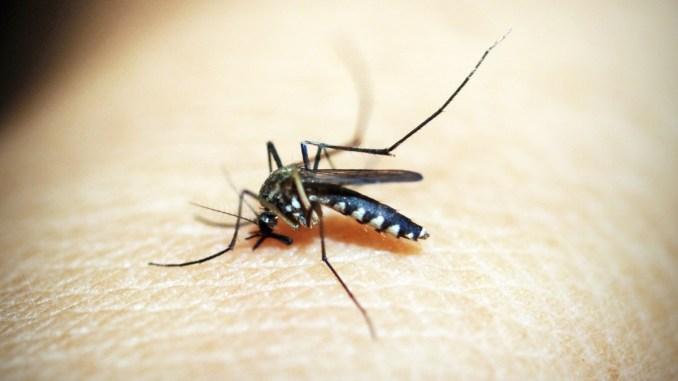 Disinfestazione contro zanzare adulte, sarà fatta nella notte del 6, tutti gli accorgimenti