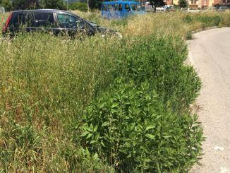 Zone di Bastia Umbra lasciate all'incuria, la rabbia di un cittadino