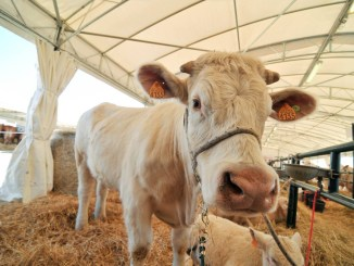 Agriumbria al viaBastia Umbra ad Umbriafiere il mondo agricolo italiano