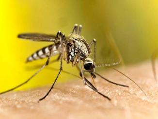 Bastia Umbra aderisce al progetto di monitoraggio sulla zanzara tigre