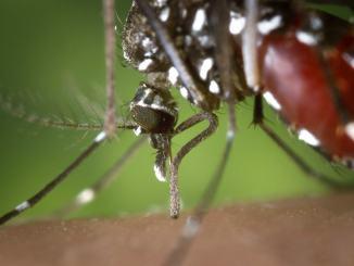 Prevenzione contro zanzare e malattie trasmesse dall'insetto, regole per la città