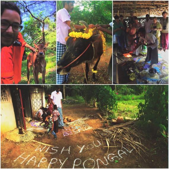 Pongal feest