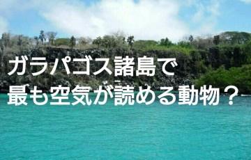 ガラパゴス諸島で最も空気が読める動物? アイキャッチ