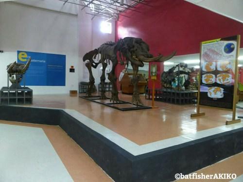 自然科学博物館 施設内②