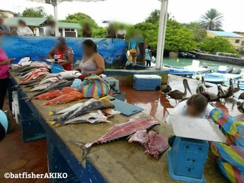 ガラパゴス諸島サンタ・クルス島の魚市場