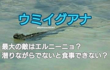 ウミイグアナ、最大の敵はエルニーニョ?潜りながらでないと食事できない? アイキャッチ