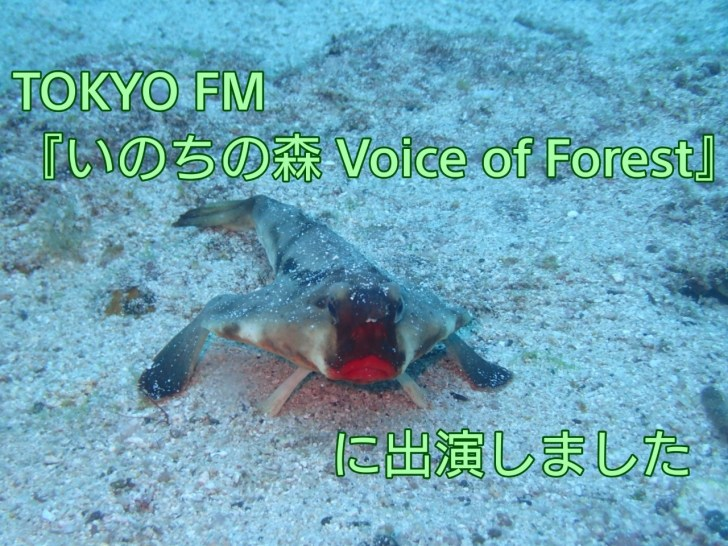 TOKYO FM『いのちの森 Voice of Forest』に出演しました アイキャッチ