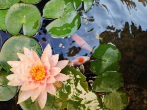 אגן המים הקדוש