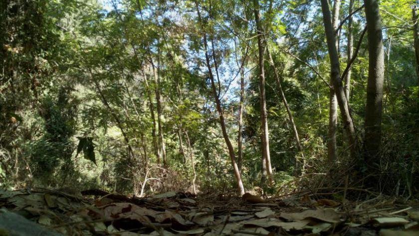 השתלטות באזור טבעי לה - אילנתה בלוטית עושה את מה שנועדה להיות, חיל חלוץ בנחל מופרע