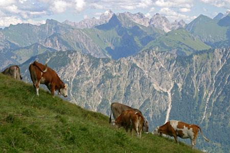Urlaub auf dem Bauernhof in Bayern