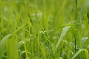 grass-411859_640