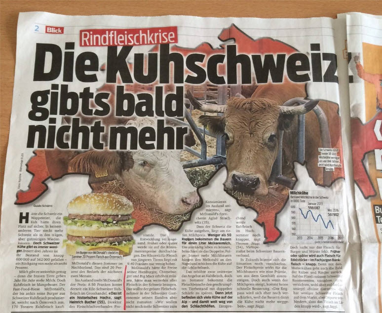 Schweiz-Rinder