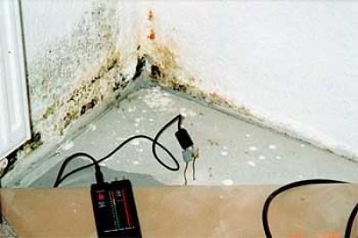 Schimmel in Wandecke unten: über der Kellerdecke