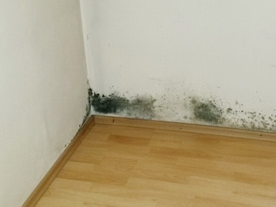 Video Wohnungskauf Gutachter Beratung vor Kauf Eigentumswohnung Vermeidung von Schimmel in der Wohnung Sachverständigenrat Hauskauf