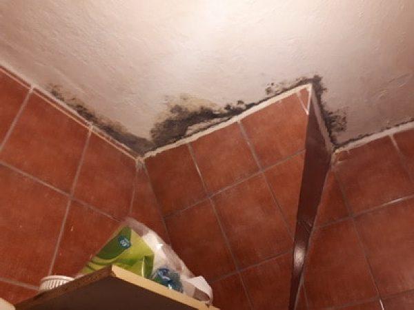 Schäden, Mietmangel, Meitmangel, Schimmelpilz in Wohnung & Feuchte Schimmel im Bad Schimmelpilz schädlich ist.