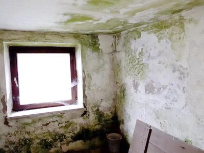Schaden am Putz Baugutachter Baugutachten