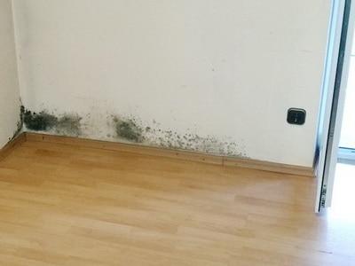 verschimmelte Wand mit Schwarzschimmel