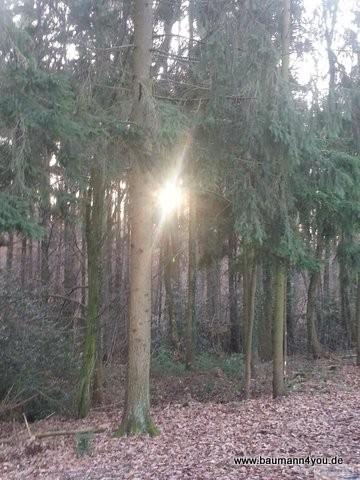 Rund um die Kippenburg - Sonne