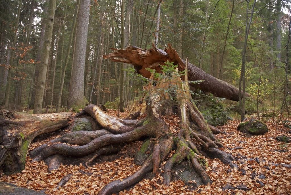 Nationalpark Bayerischer Wald November 2010