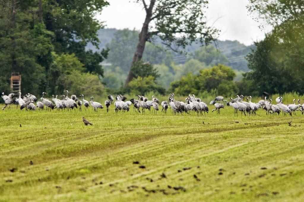 Jedes Tier benötigt ca. 20g Getreide- oder Maiskörner pro Tag
