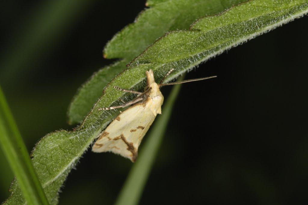 Echinger Biotop (24. Juni 2011; 20:29 Uhr)