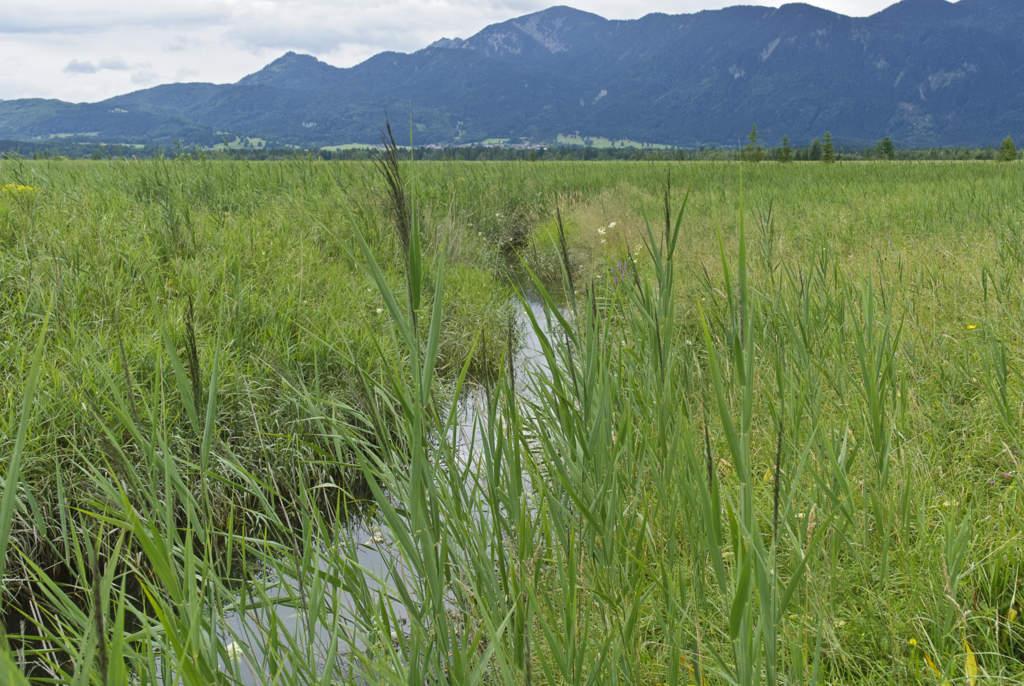 natürliche Fließgewässer im Niedermoor