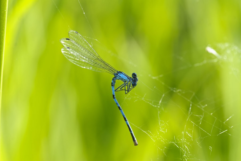 Gefangen im Spinnennetz !