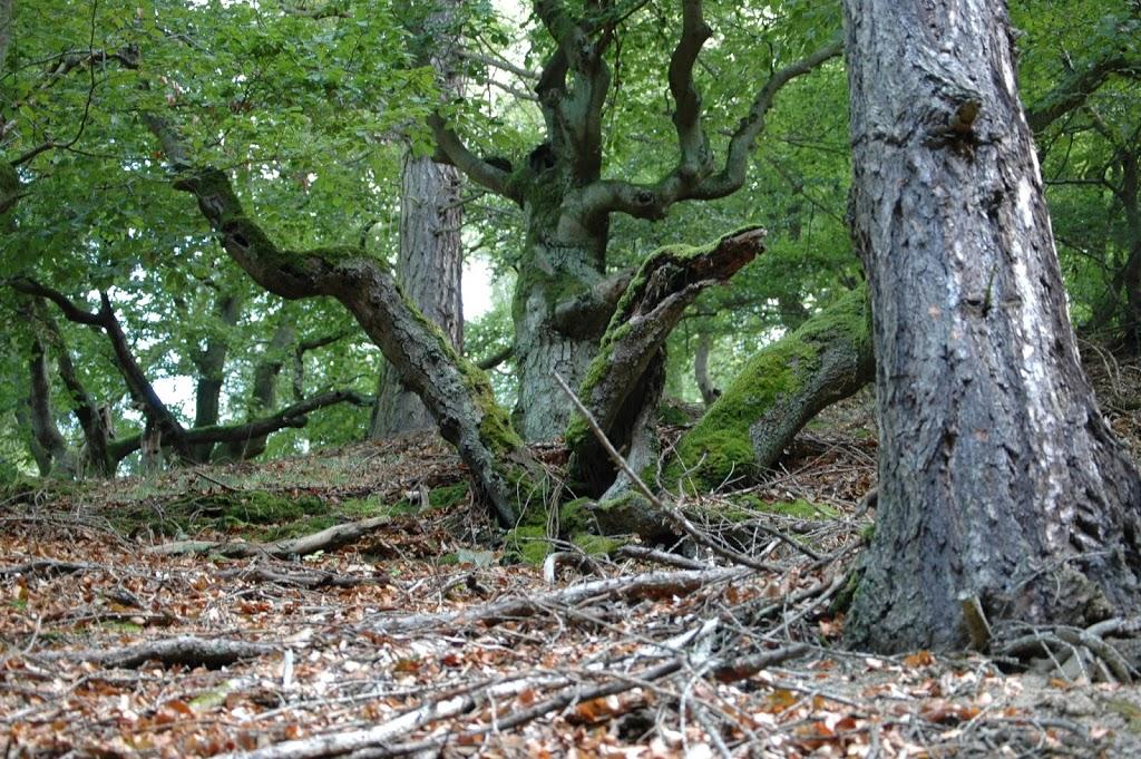 Nationalpark Edersee / Kellerwald