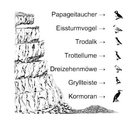 vogelfelsen
