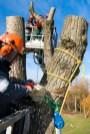 AS-Baum 2 Schulung: Rigging mit Hubsteiger