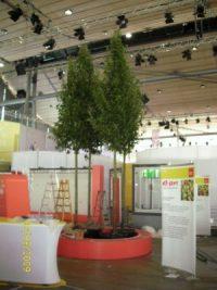 Bäume für die Ideen Expo Hannover